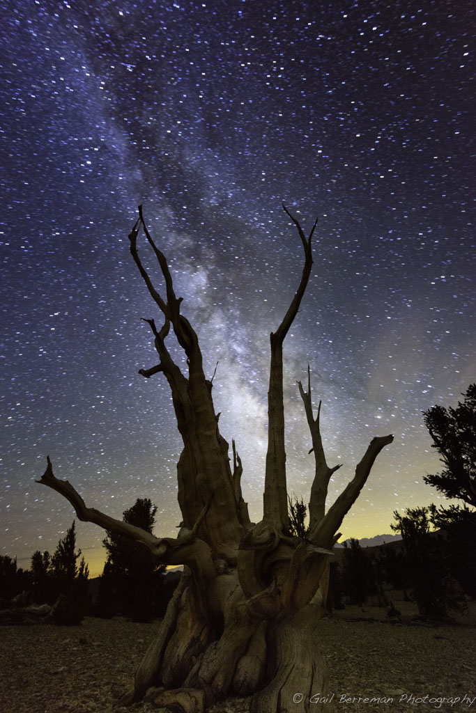 Image 2 Milky Way Among the Bristlecone Pines