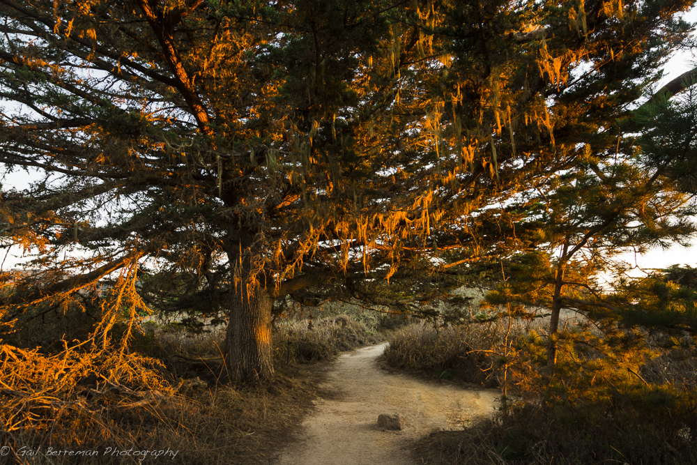 Golden Light, Point Lobos State Reserve, Big Sur