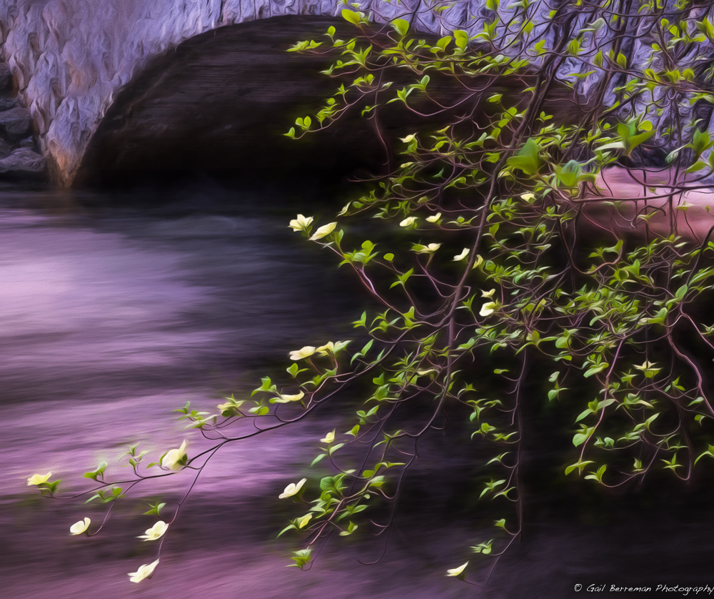 Dogwoods, Merced River and Pohono Bridge
